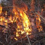 Eldning